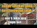 Keistimewaan Jalak Kebo Jalak Uren Jalak Nias Jalak Pito Jalak Bali  Mp3 - Mp4 Download