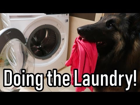 Smart Dog Does the Laundry!