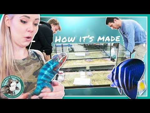 HOW FISH TANKS ARE MADE! // P.s. I Want A Chameleon