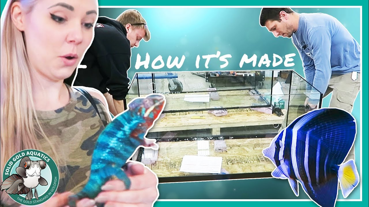 how-fish-tanks-are-made-p-s-i-want-a-chameleon