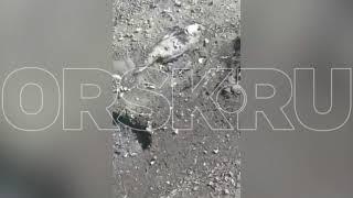На Ириклинском водохранилище массово гибнет рыба