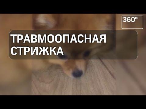 Во время стрижки собаке повредили лапку