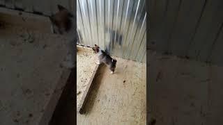Обучение щенков лаек. Продам щенков, дата рождения 09.11.2018г.контакт в описании.