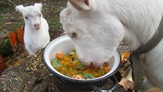 Гурийская деревня Сельские животные Красота природы