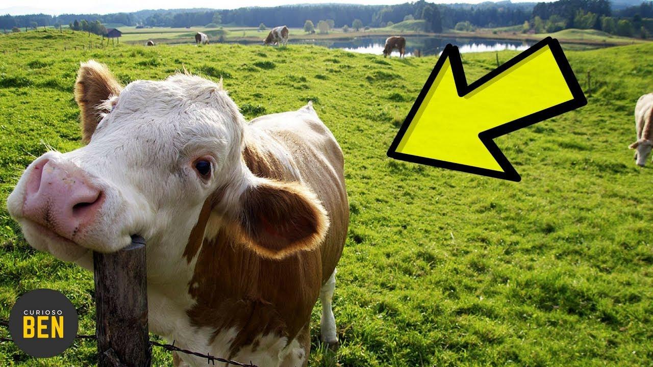 7-animales-que-tienen-comportamientos-extraos