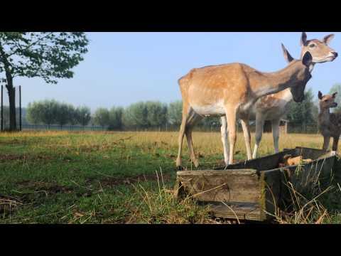 4k One-Hour Window -  Deer feeding with Fawns - Scenery, Relaxation, Meditation