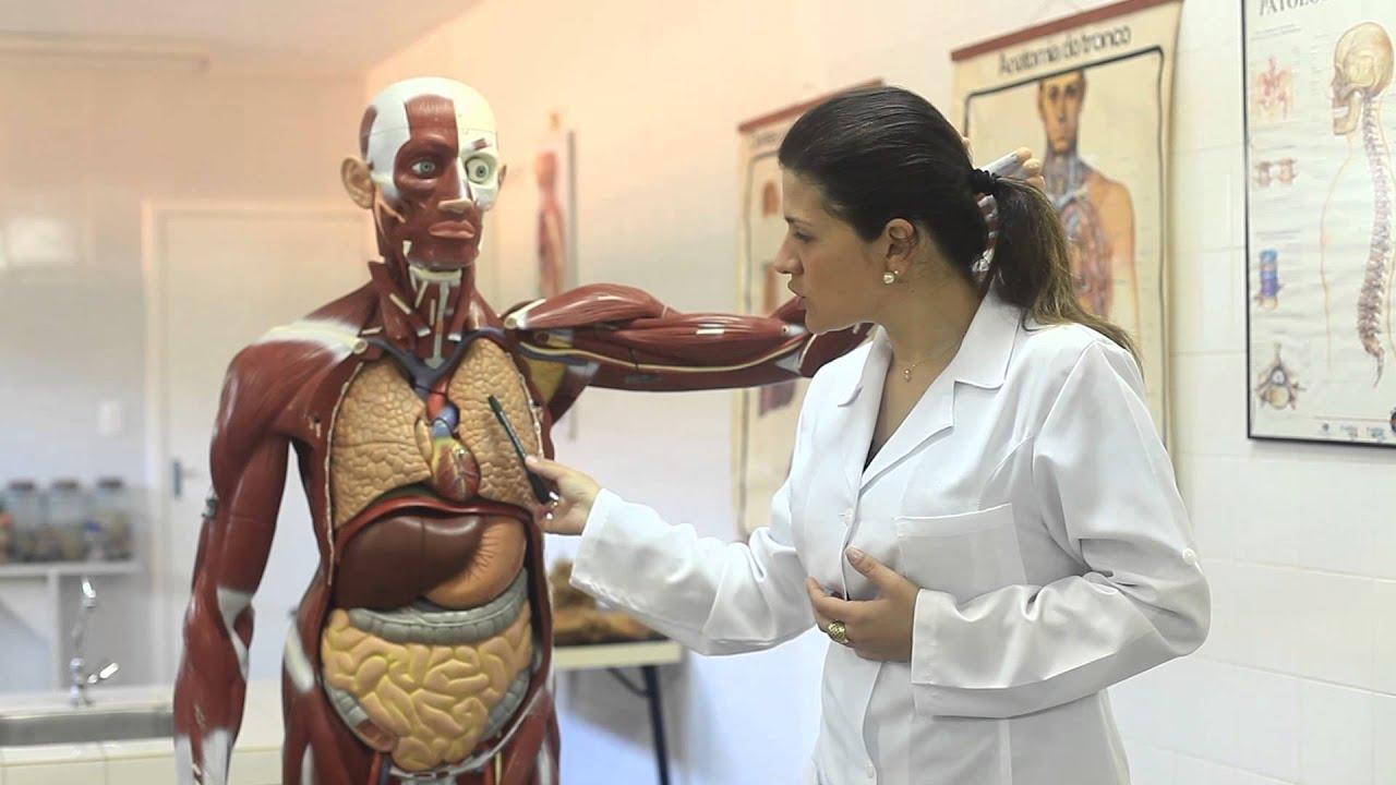 Rim anatomia e fisiologia
