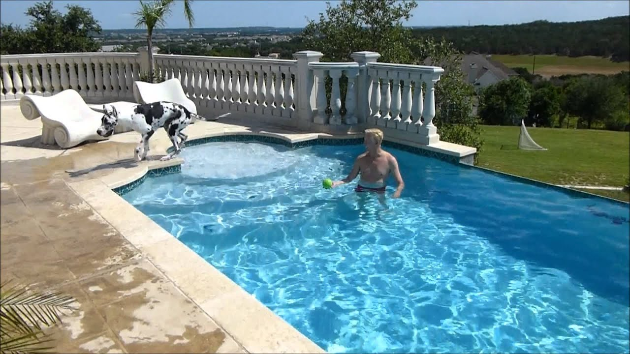 Harlequin great dane swimming in the pool youtube for Good swimming pools