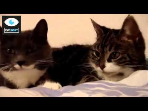 Cute Cats Talking