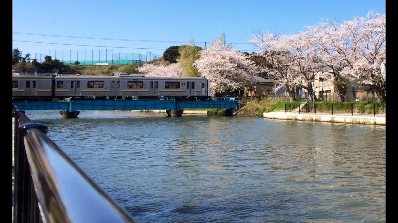 佐原 両総用水の桜 - YouTube