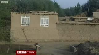 Афганистан лакайлари