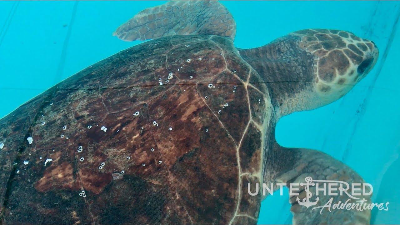 Turtle Rescue & Release!