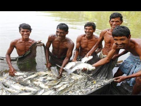 Wow seine net fishing- Huge fish jumping seane-Khmer cast