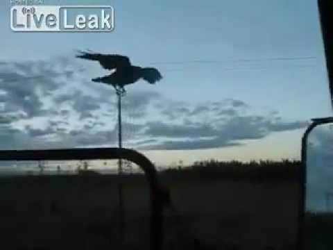 Three black crows bad luck