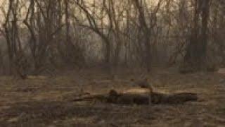 Wildlife and wetland area devastated in Brazil