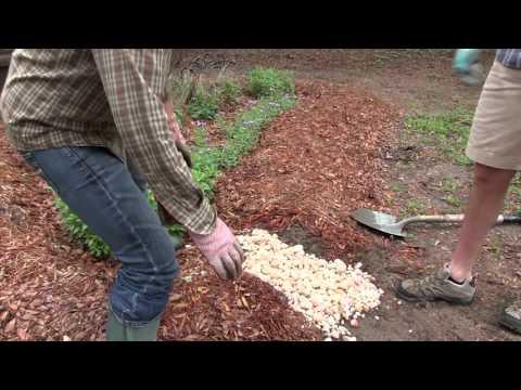 Creating Flow Virtual Rain Garden 10 Of 17 Clemson
