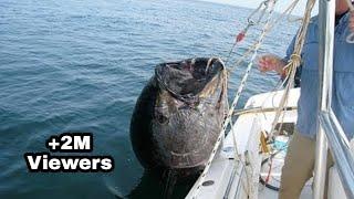 Master giant tuna sirip kuning fishing