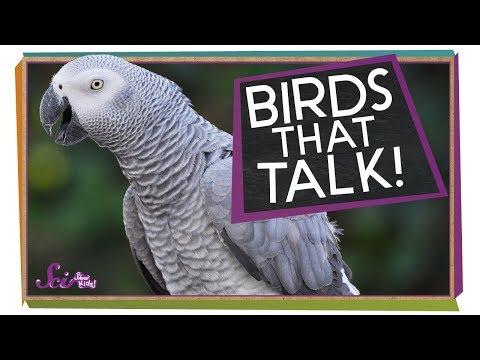 Birds that Talk!