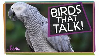 Birds that Talk!
