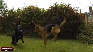 Best Dog Jump Fail Compilation Funny