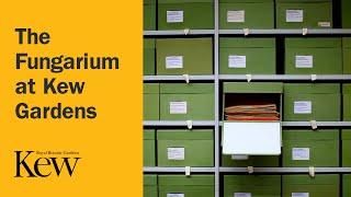 Beyond the Gardens: The Fungarium at Kew Gardens