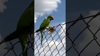 Bird's Moment | Poppy Fields #Shorts