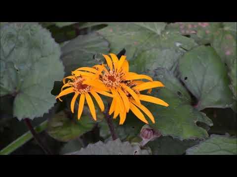 Многолетние цветы и растения с желтыми цветами для вашего сада