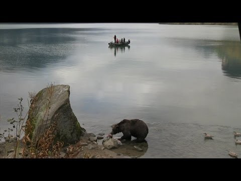 Knock Knock, Who's Bear   Alaska State Troopers