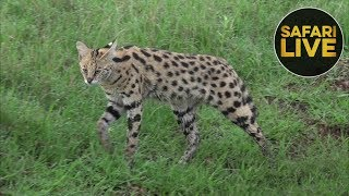 safariLIVE - Sunrise Safari - December 24, 2018