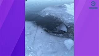 В Пензе выяснят обстоятельства гибели подростка на воде