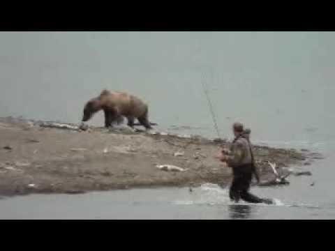 Katmai Bear Close Encounter