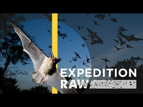 Caught in a Bat Tornado | Expedition Raw