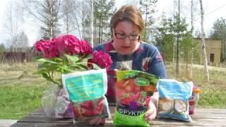 Наша дача.Весенний уход за розой, малиной, смородиной, луком и чесноком.