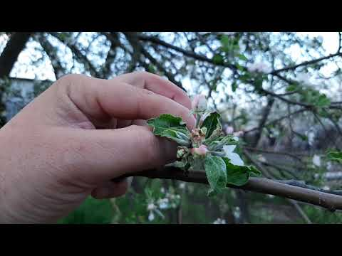 Вопрос: Как уберечься от цветоеда?