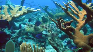 Marine Biome