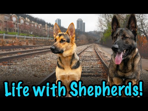 Day in the Life with German Shepherds! Hiking New Trails.