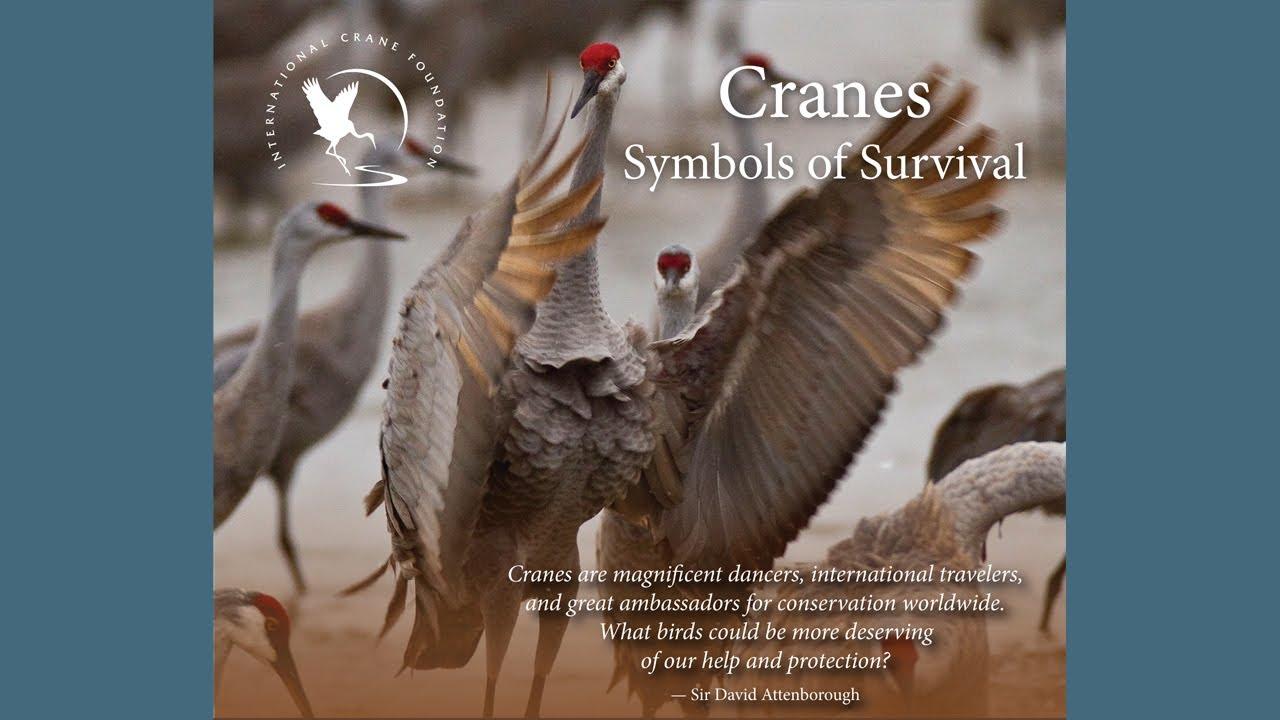 Cranes: Symbols of Survival