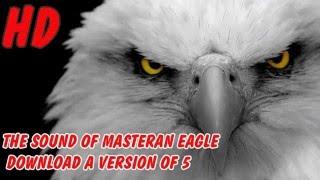 Download Suara Masteran Burung Elang Versi 5