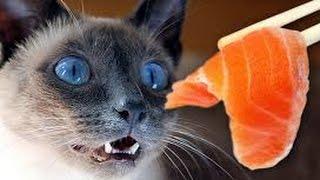 Простая кошка_Чем кормить кошку