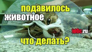 видео Помогите, котёнок умирает! Что делать?