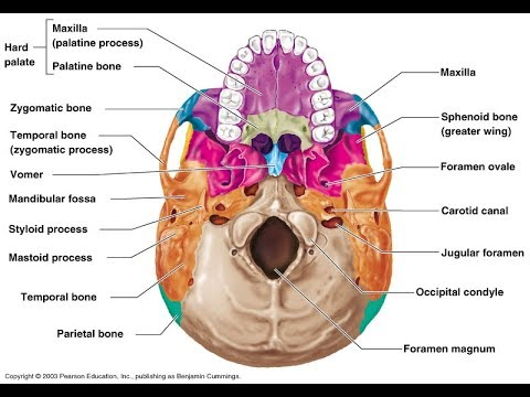How To Memorize A Diagram With A Memory Palace Anatomy Youtube
