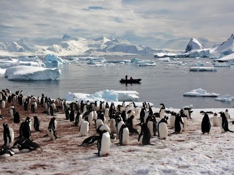 National Geographic Expedition - ANTARCTICA  & Falkland Islands  ncnoah.com