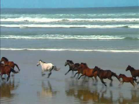 Great White Shark Eats A Horse Youtube