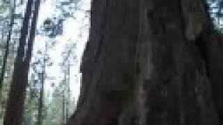 Angels Camp, CA trip Video Part 5: Calaveras Big Trees State Park