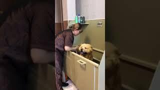 """Мойка собаки в груминг салоне. Ванна для мытья собак """"Animals"""""""