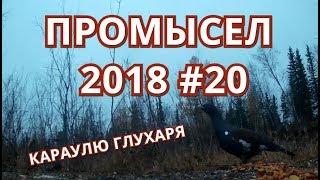 ПРОМЫСЕЛ 2018  #20  ОХОТА НА ГЛУХАРЯ.