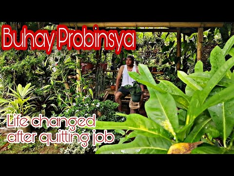 MY LIFE IN THE PROVINCE AFTER QUITTING MY JOB IN METRO MANILA | BUHAY PROBINSYA | CINEMATIC VIDEO