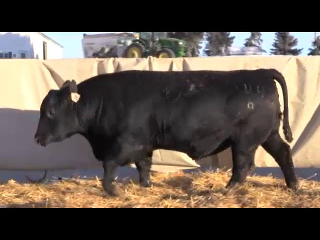 Marcy Cattle Company Lot 18