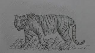 Как нарисовать африканского тигра. Wie man einen afrikanischen Tiger zeichnet(Спасибо за просмотр моего видео, лайкни и подпишись если понравилось диз лайкни если непонравилось. Danke..., 2016-03-06T12:58:24.000Z)
