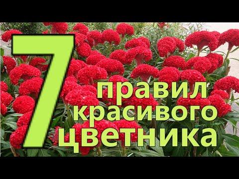 7 ПРАВИЛ СОЗДАНИЯ КРАСИВОГО ЦВЕТНИКА или  КЛУМБЫ. Подбор красивых ЦВЕТОВ и РАСТЕНИЙ для ЦВЕТНИКА.
